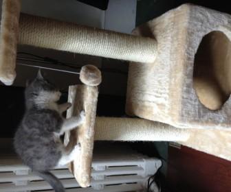 comment faire jouer son chat