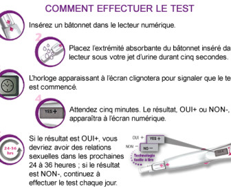 comment fonctionne 1 test d'ovulation