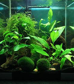 comment décorer nano aquarium
