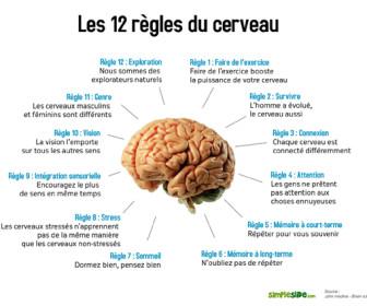 comment fonctionne le cerveau