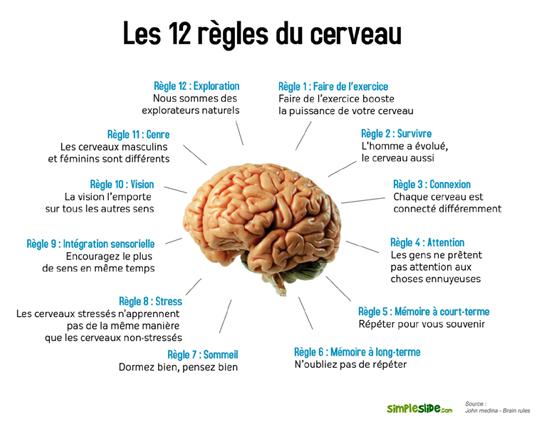 comment maigrir avec le cerveau