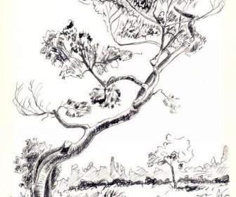 comment dessiner à la plume