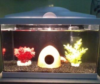comment laver gravier aquarium