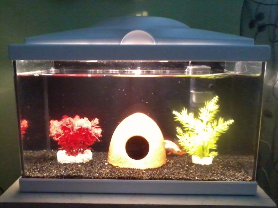 Comment laver gravier aquarium for Gravier pour aquarium