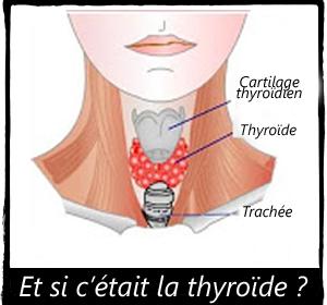 comment maigrir malgré hypothyroidie