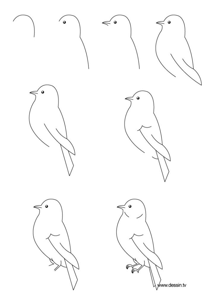 Tuto Dessiner Un Oiseau