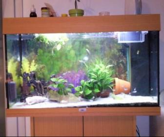 comment décorer un aquarium