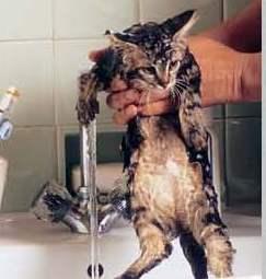 comment laver mon chat
