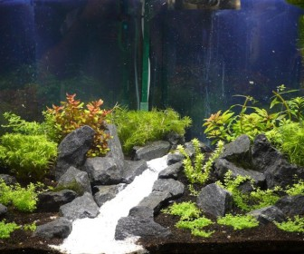 comment décorer son aquarium