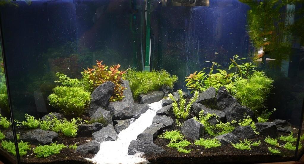 comment d 233 corer aquarium