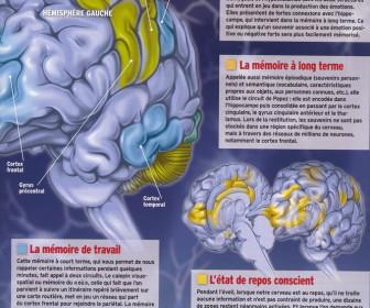 comment fonctionne notre cerveau